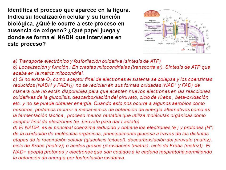 Identifica el proceso que aparece en la figura