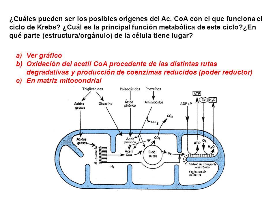 ¿Cuáles pueden ser los posibles orígenes del Ac
