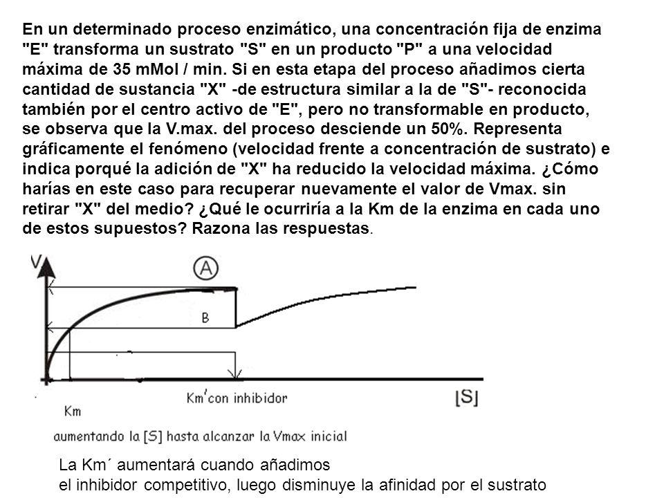 En un determinado proceso enzimático, una concentración fija de enzima E transforma un sustrato S en un producto P a una velocidad máxima de 35 mMol / min. Si en esta etapa del proceso añadimos cierta cantidad de sustancia X -de estructura similar a la de S - reconocida también por el centro activo de E , pero no transformable en producto, se observa que la V.max. del proceso desciende un 50%. Representa gráficamente el fenómeno (velocidad frente a concentración de sustrato) e indica porqué la adición de X ha reducido la velocidad máxima. ¿Cómo harías en este caso para recuperar nuevamente el valor de Vmax. sin retirar X del medio ¿Qué le ocurriría a la Km de la enzima en cada uno de estos supuestos Razona las respuestas.