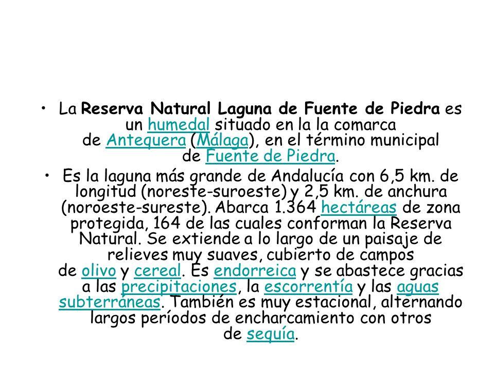 La Reserva Natural Laguna de Fuente de Piedra es un humedal situado en la la comarca de Antequera (Málaga), en el término municipal de Fuente de Piedra.