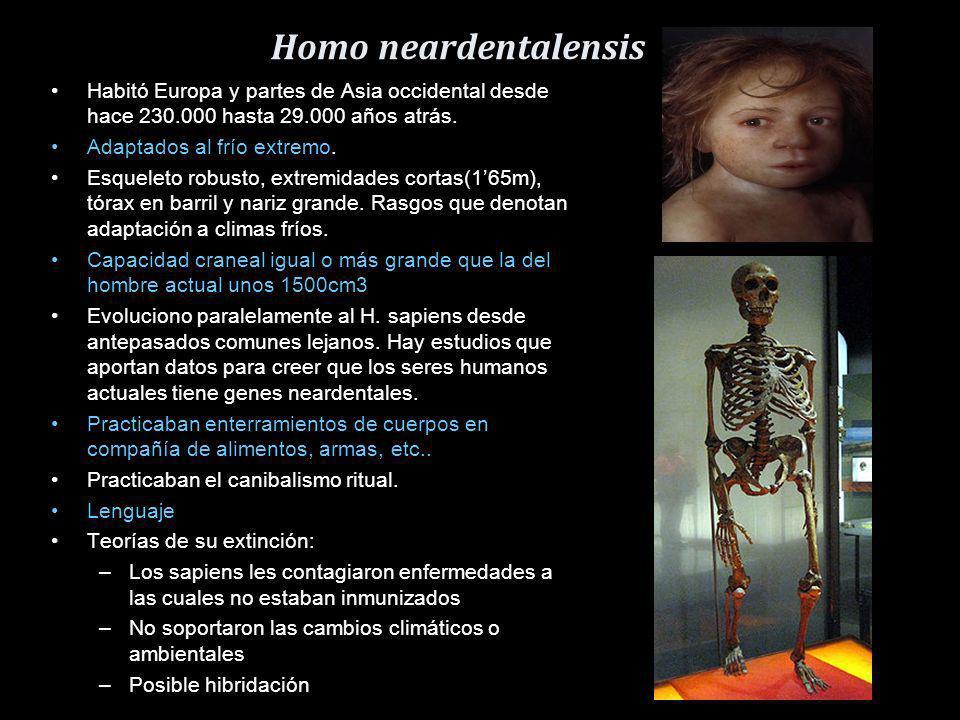 Homo neardentalensis Habitó Europa y partes de Asia occidental desde hace 230.000 hasta 29.000 años atrás.