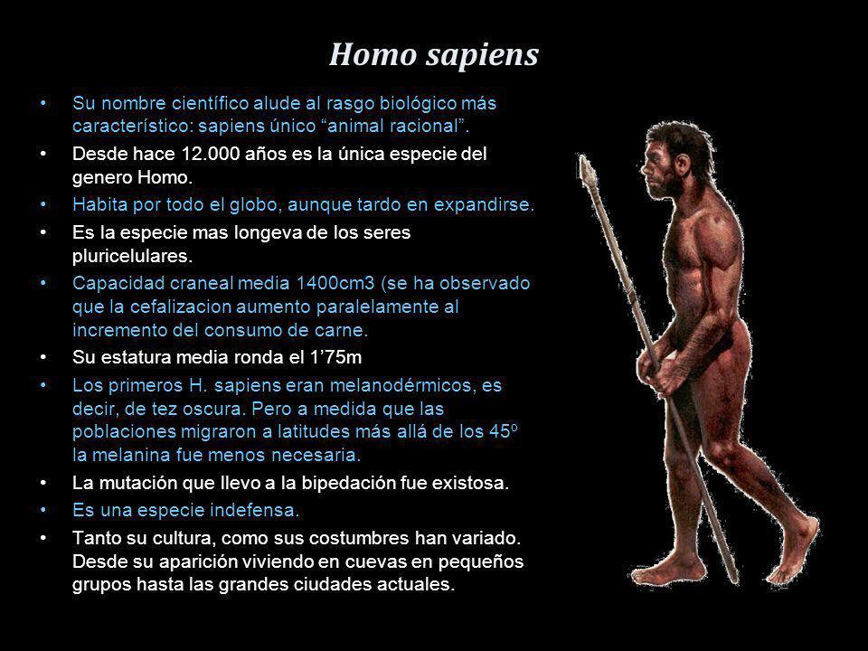 Homo sapiens Su nombre científico alude al rasgo biológico más característico: sapiens único animal racional .