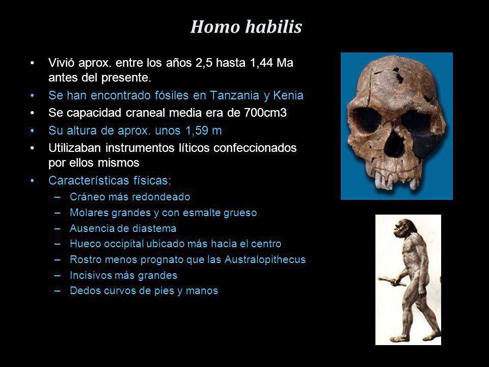 Homo habilis Vivió aprox. entre los años 2,5 hasta 1,44 Ma antes del presente. Se han encontrado fósiles en Tanzania y Kenia.