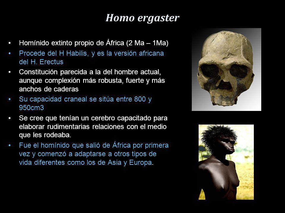 Homo ergaster Homínido extinto propio de África (2 Ma – 1Ma)