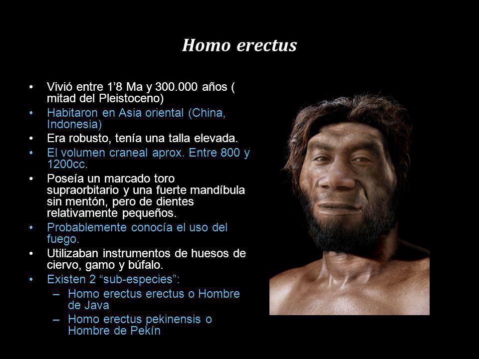 Homo erectus Vivió entre 1'8 Ma y 300.000 años ( mitad del Pleistoceno) Habitaron en Asia oriental (China, Indonesia)