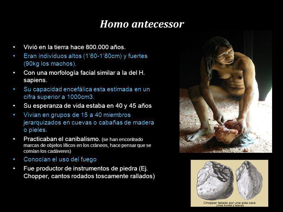 Homo antecessor Vivió en la tierra hace 800.000 años.