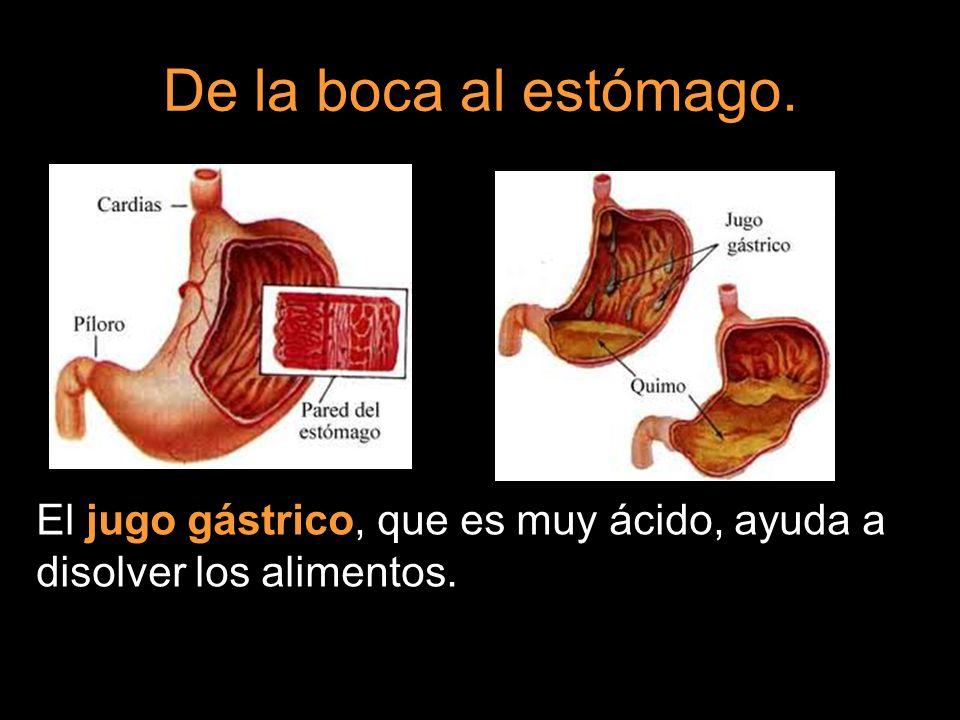 De la boca al estómago. El jugo gástrico, que es muy ácido, ayuda a disolver los alimentos.