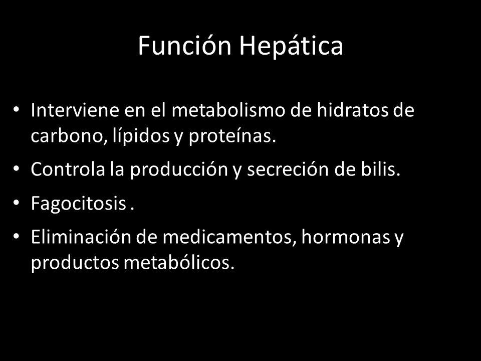 Función Hepática Interviene en el metabolismo de hidratos de carbono, lípidos y proteínas. Controla la producción y secreción de bilis.