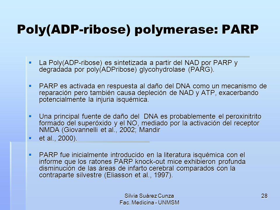 Poly(ADP-ribose) polymerase: PARP