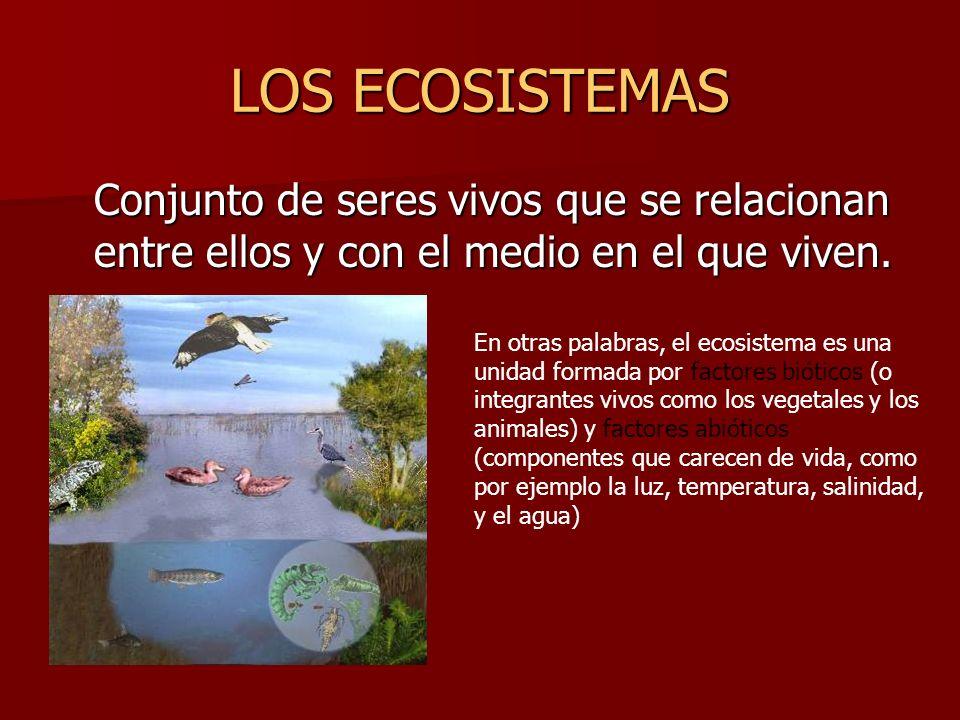 LOS ECOSISTEMASConjunto de seres vivos que se relacionan entre ellos y con el medio en el que viven.