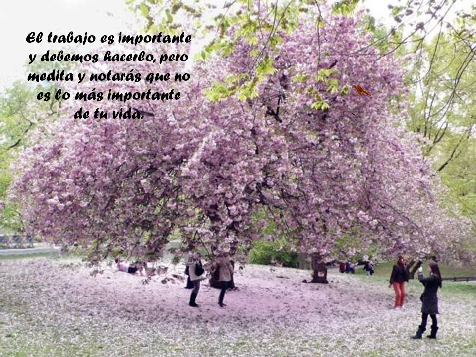 El trabajo es importante y debemos hacerlo, pero medita y notarás que no es lo más importante de tu vida.