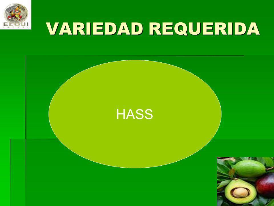VARIEDAD REQUERIDA HASS