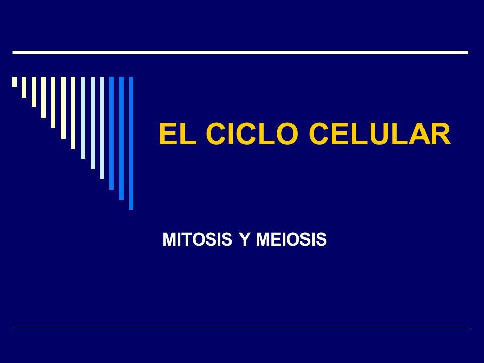 EL CICLO CELULAR MITOSIS Y MEIOSIS