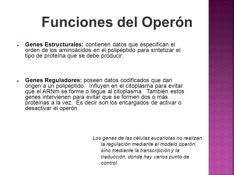 Funciones del Operón