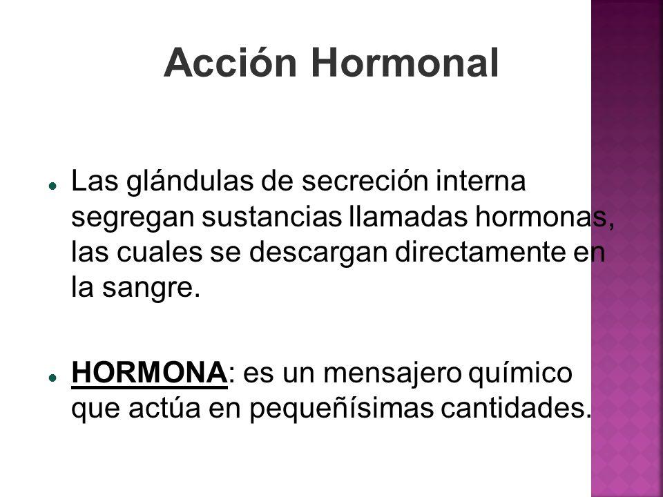 Acción Hormonal Las glándulas de secreción interna segregan sustancias llamadas hormonas, las cuales se descargan directamente en la sangre.