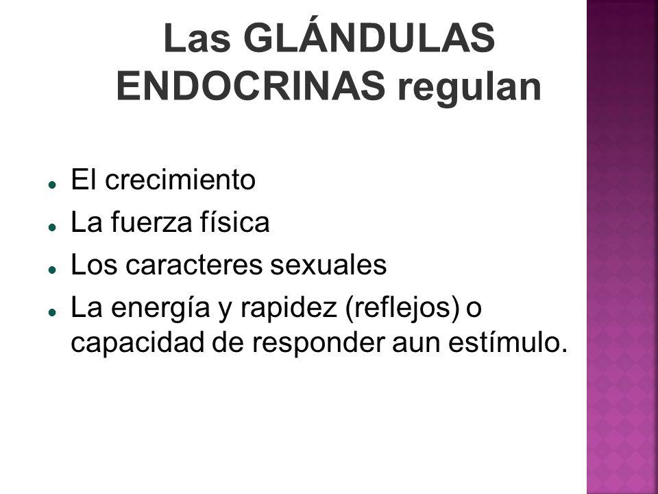 Las GLÁNDULAS ENDOCRINAS regulan