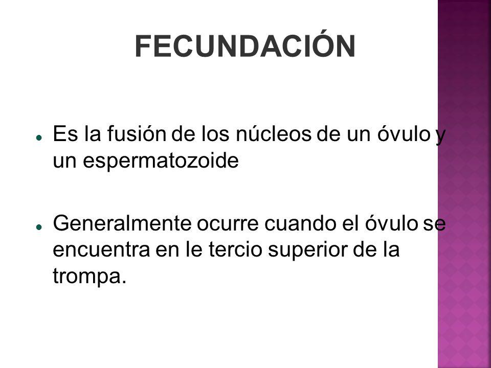 FECUNDACIÓNEs la fusión de los núcleos de un óvulo y un espermatozoide.