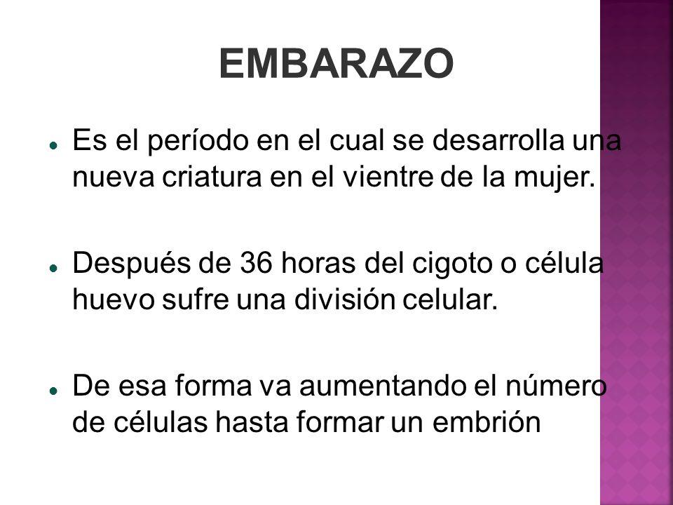 EMBARAZO Es el período en el cual se desarrolla una nueva criatura en el vientre de la mujer.