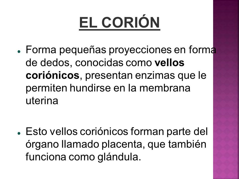 EL CORIÓN
