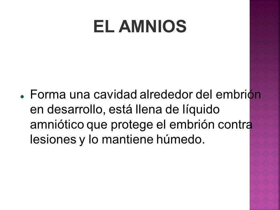 EL AMNIOS