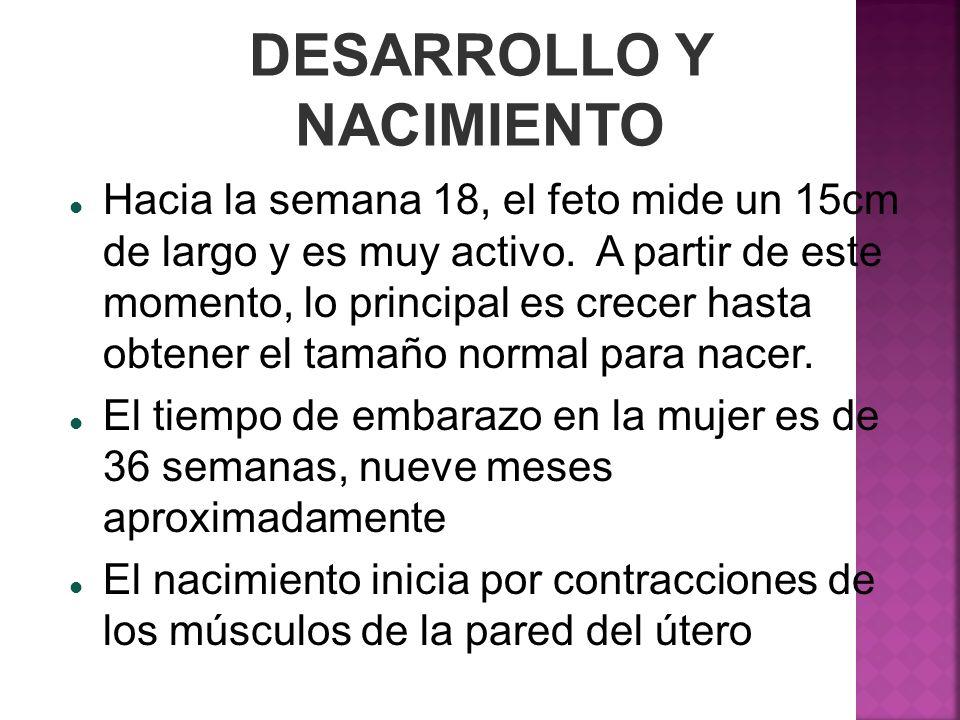 DESARROLLO Y NACIMIENTO