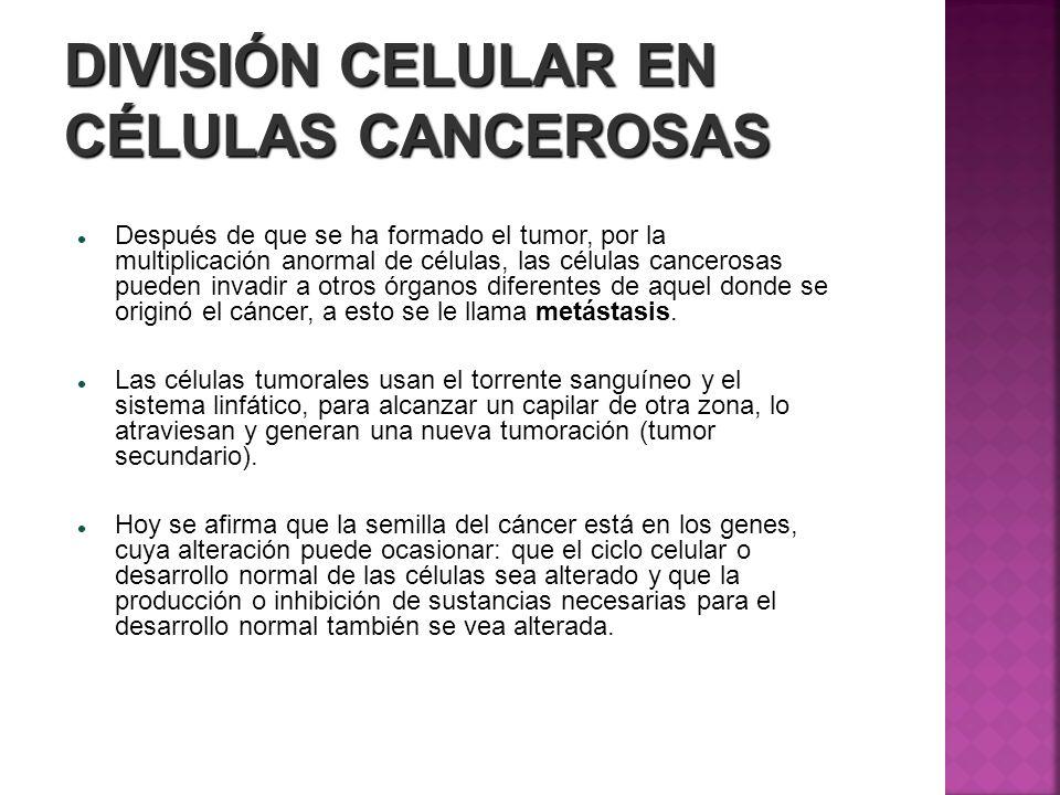 DIVISIÓN CELULAR EN CÉLULAS CANCEROSAS