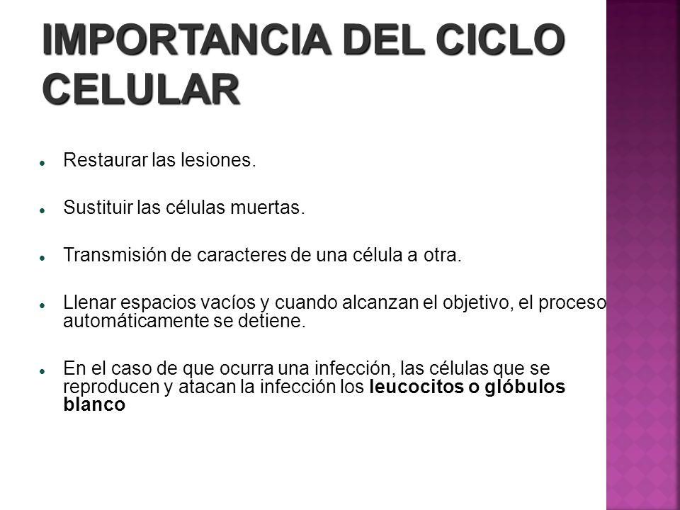 IMPORTANCIA DEL CICLO CELULAR