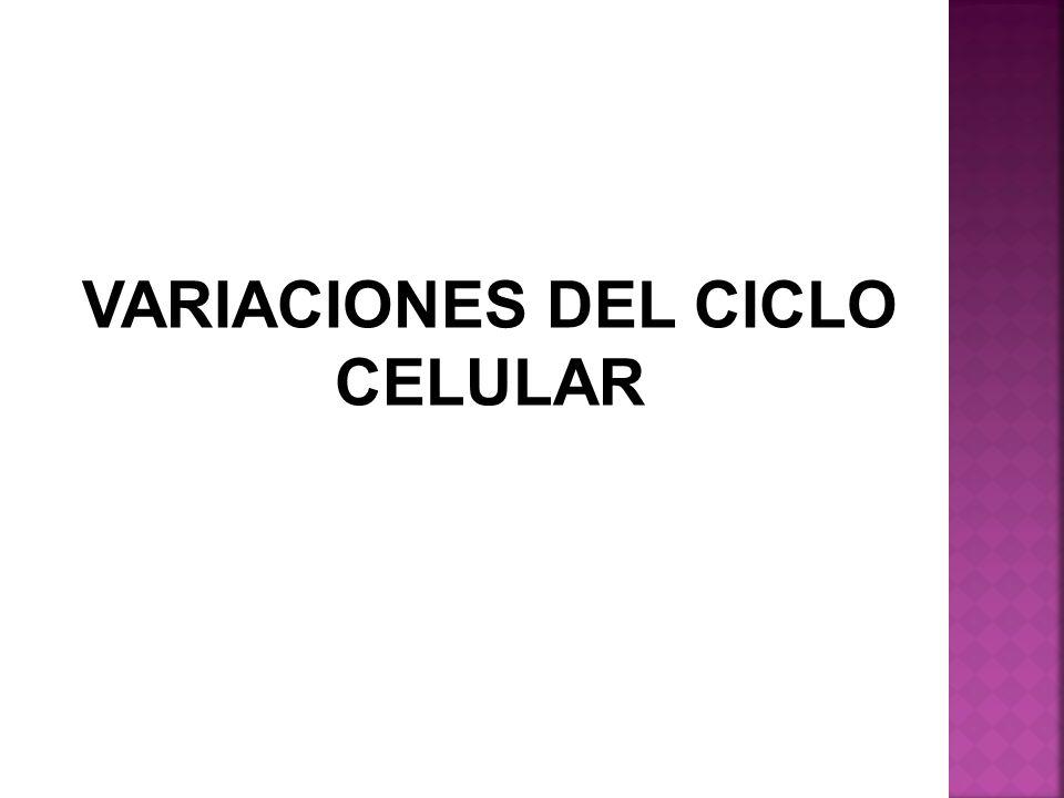 VARIACIONES DEL CICLO CELULAR