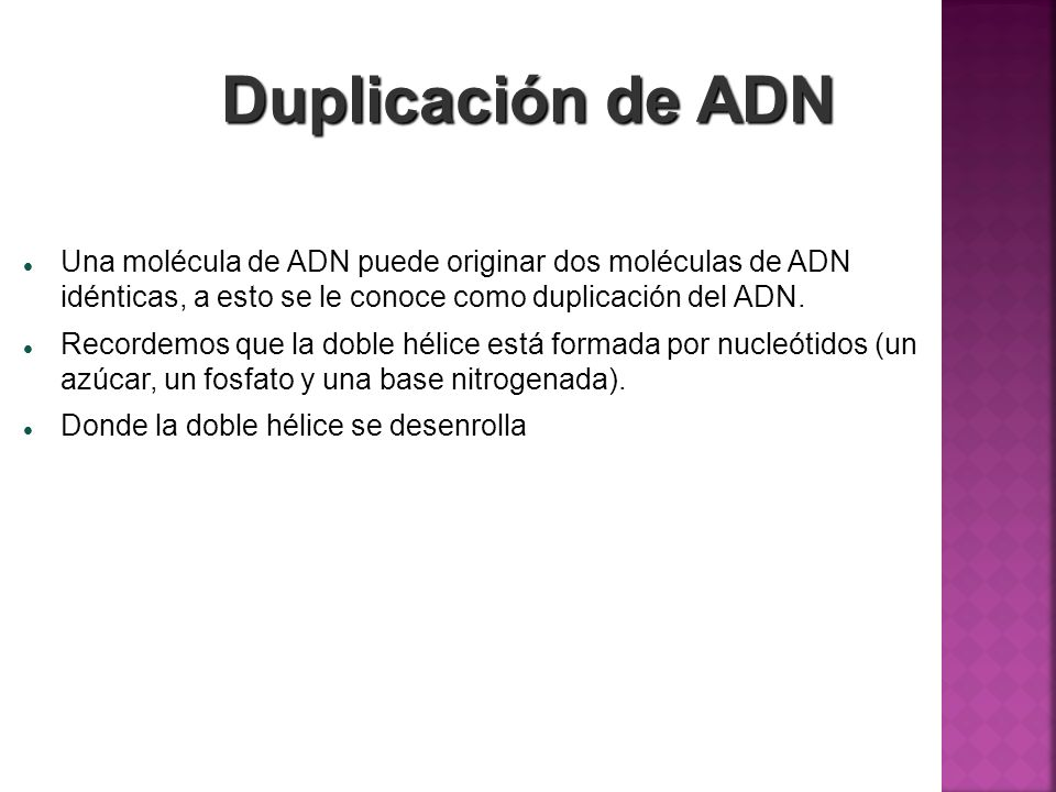 Duplicación de ADN Una molécula de ADN puede originar dos moléculas de ADN idénticas, a esto se le conoce como duplicación del ADN.