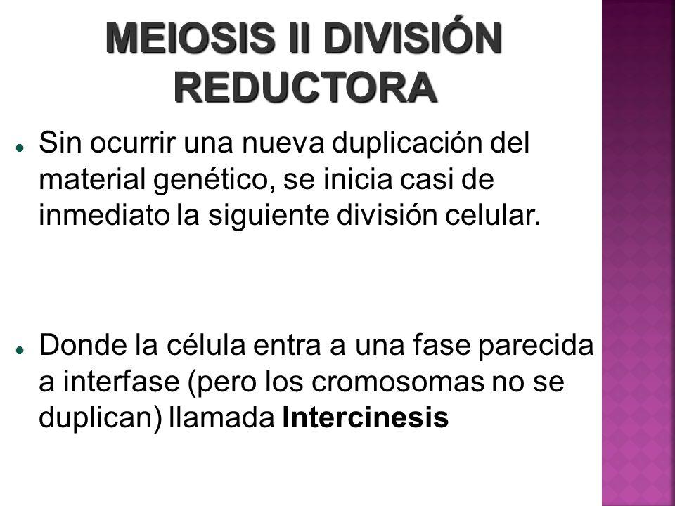 MEIOSIS II DIVISIÓN REDUCTORA