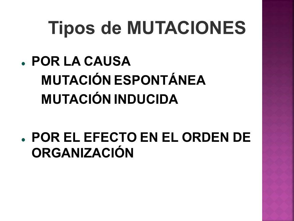 Tipos de MUTACIONES POR LA CAUSA MUTACIÓN ESPONTÁNEA MUTACIÓN INDUCIDA