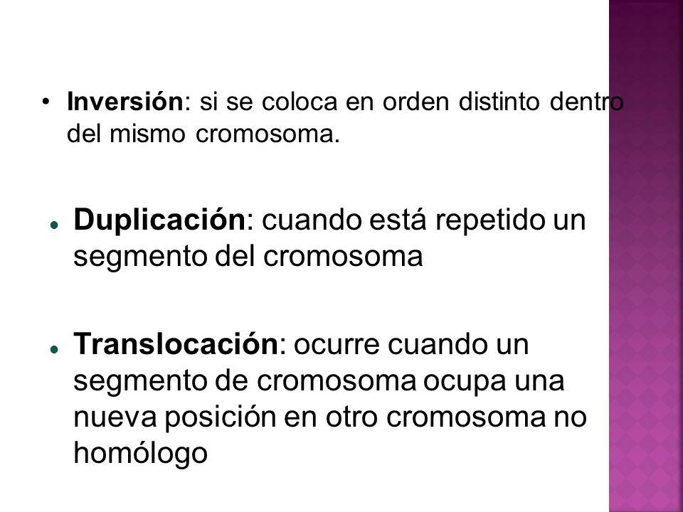 Duplicación: cuando está repetido un segmento del cromosoma