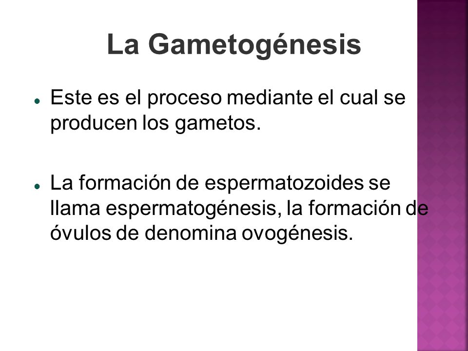 La GametogénesisEste es el proceso mediante el cual se producen los gametos.