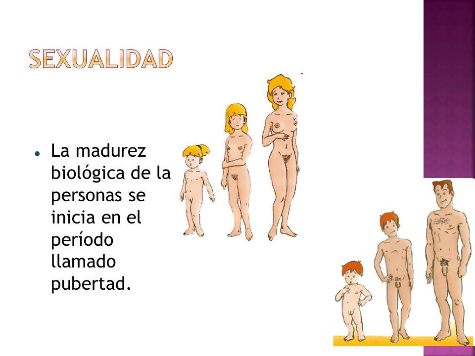 Sexualidad La madurez biológica de la personas se inicia en el período llamado pubertad.
