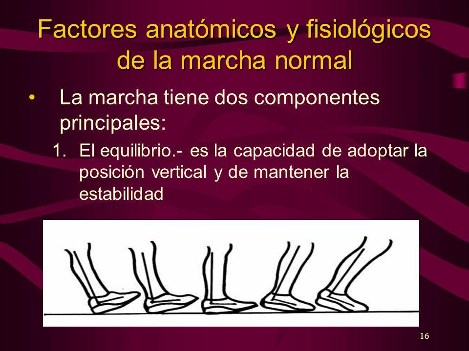 Factores anatómicos y fisiológicos de la marcha normal