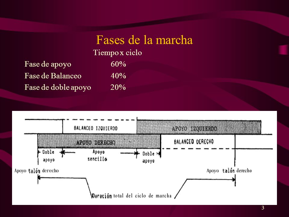 Fases de la marcha Tiempo x ciclo Fase de apoyo 60%
