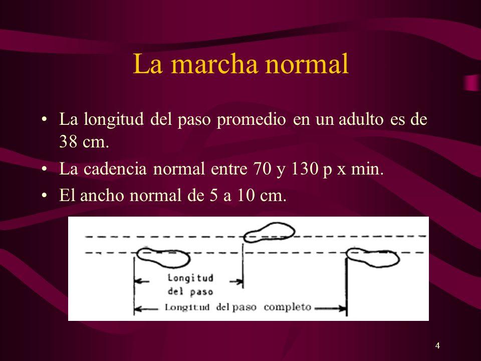 LA MARCHA NORMAL La marcha normal. La longitud del paso promedio en un adulto es de 38 cm. La cadencia normal entre 70 y 130 p x min.