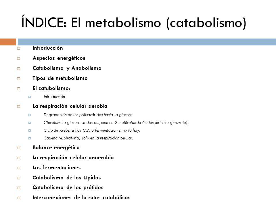 ÍNDICE: El metabolismo (catabolismo)