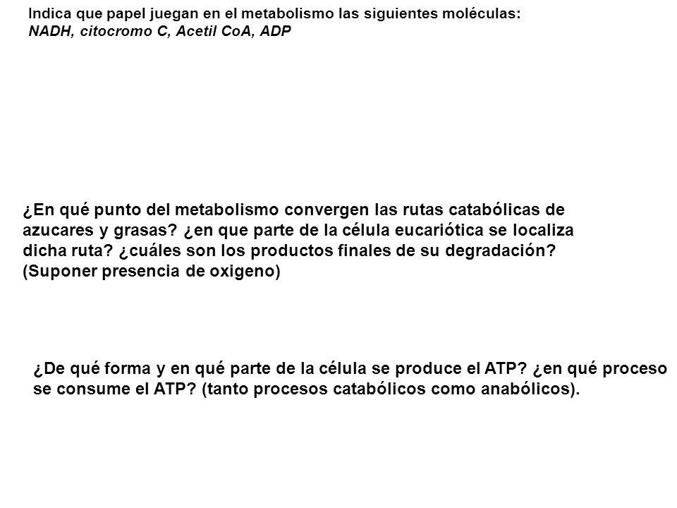Indica que papel juegan en el metabolismo las siguientes moléculas: