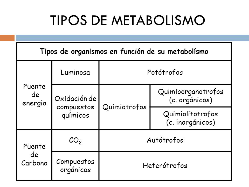 Tipos de organismos en función de su metabolísmo