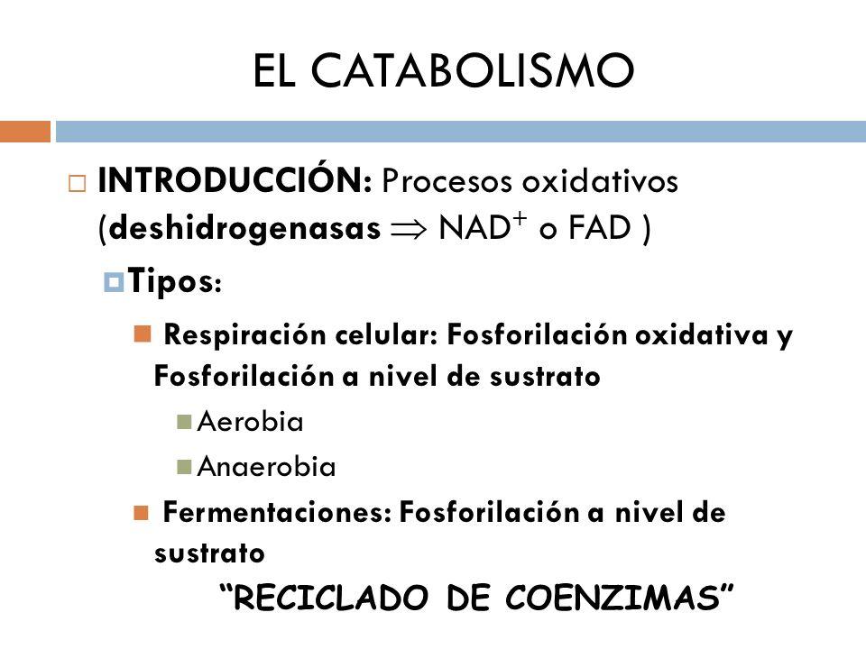 RECICLADO DE COENZIMAS