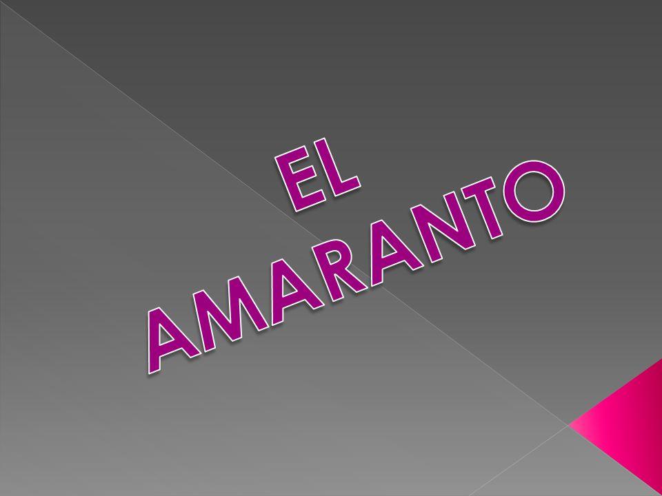 EL AMARANTO 1