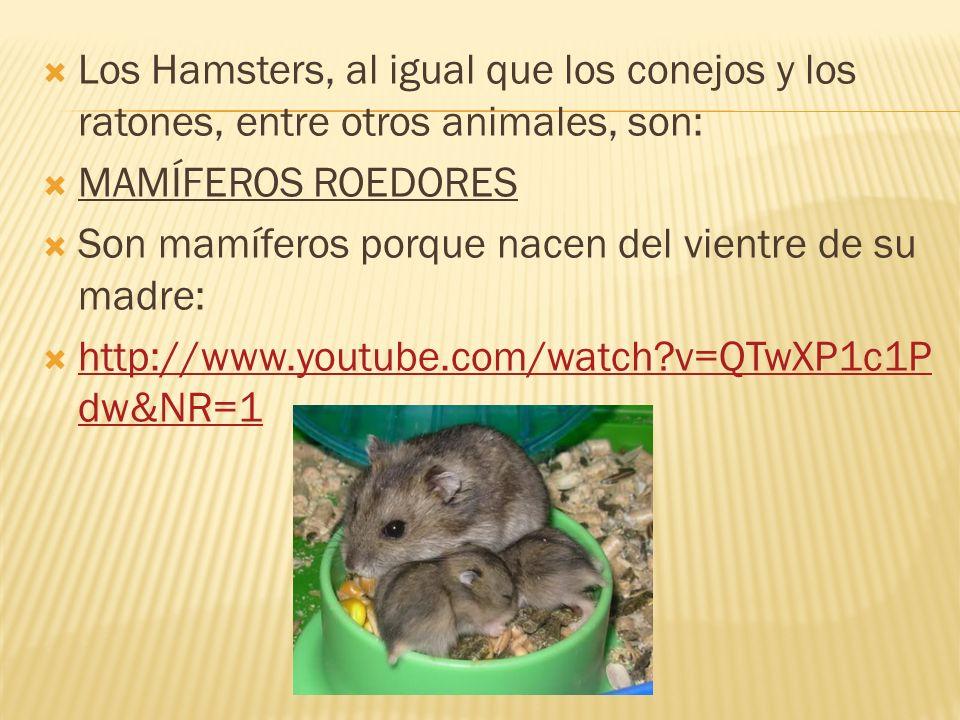 Los Hamsters, al igual que los conejos y los ratones, entre otros animales, son: