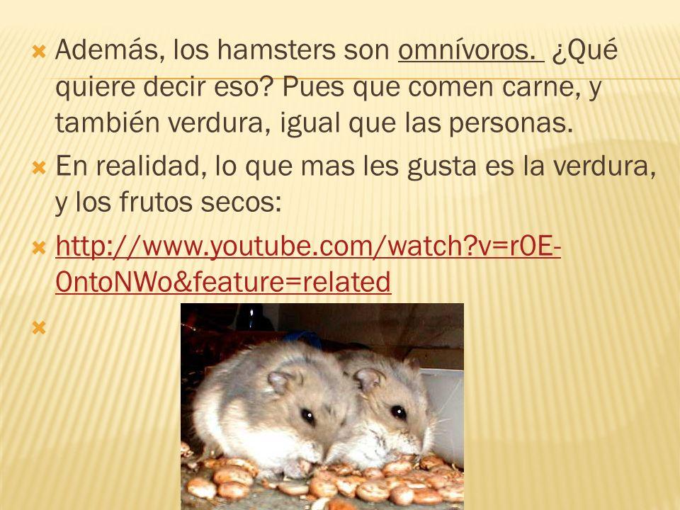 Además, los hamsters son omnívoros. ¿Qué quiere decir eso