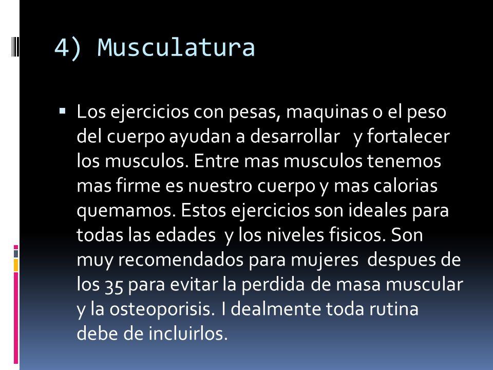 4) Musculatura
