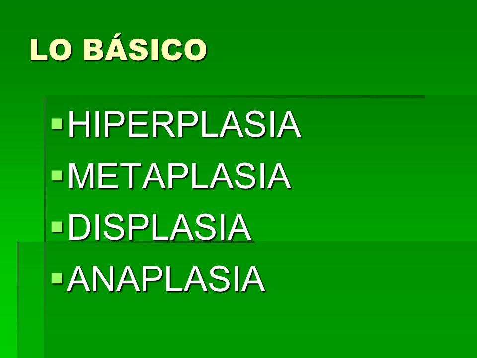 LO BÁSICO HIPERPLASIA METAPLASIA DISPLASIA ANAPLASIA