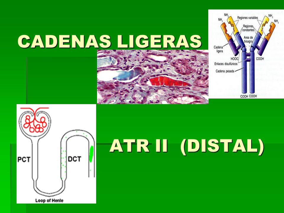 CADENAS LIGERAS ATR II (DISTAL)
