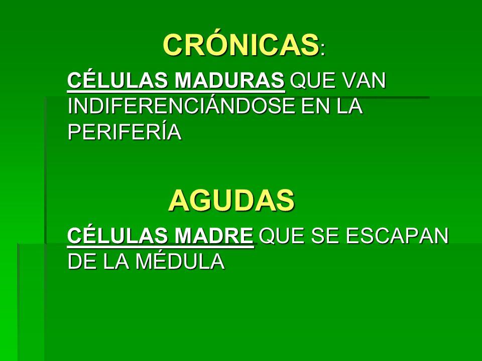 CRÓNICAS: CÉLULAS MADURAS QUE VAN INDIFERENCIÁNDOSE EN LA PERIFERÍA.