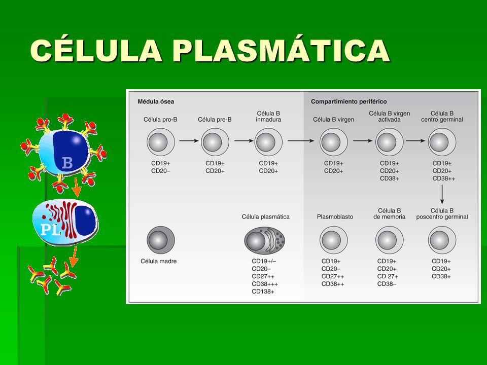 CÉLULA PLASMÁTICA