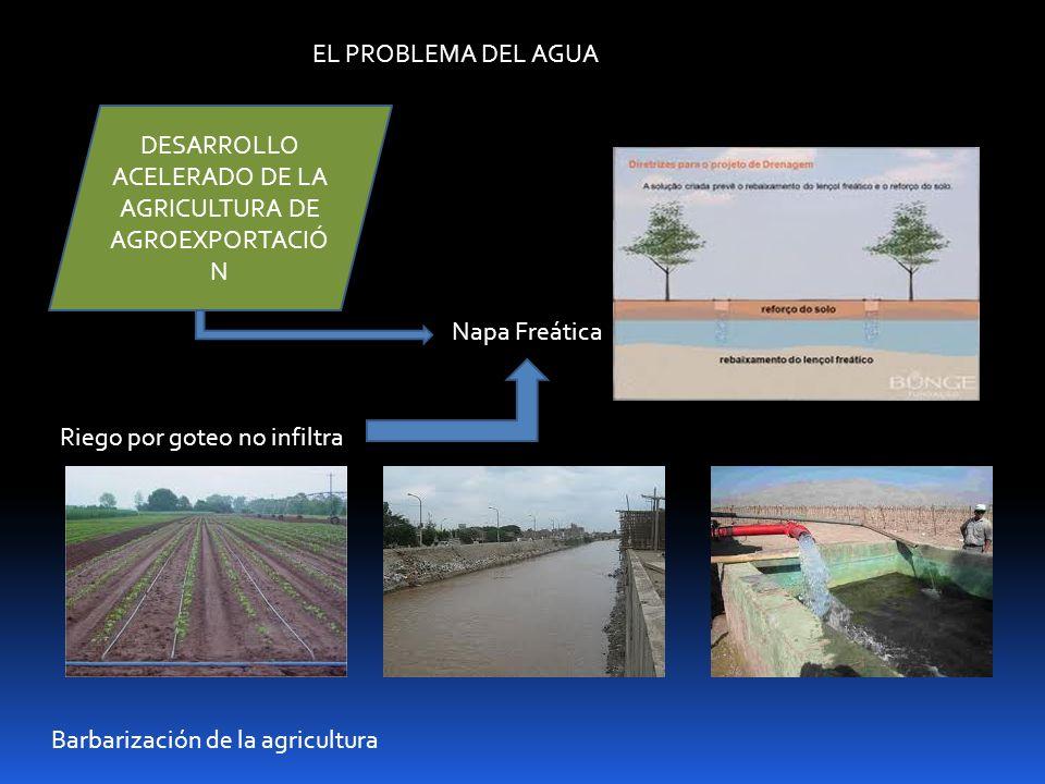 DESARROLLO ACELERADO DE LA AGRICULTURA DE AGROEXPORTACIÓN
